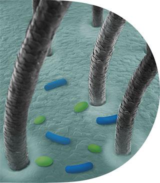 microbiome Unbalance